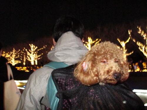 101225 カニ X's パーティ 昭和記念公園イルミ 167.JPG