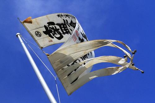 110116 アニーと高尾山 104.JPG