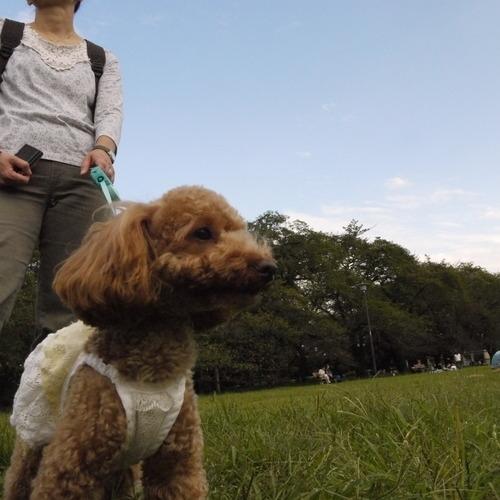 110925小金井公園 011.JPG
